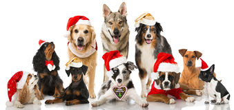 christmas-dogs-group-isolated-white-45179844